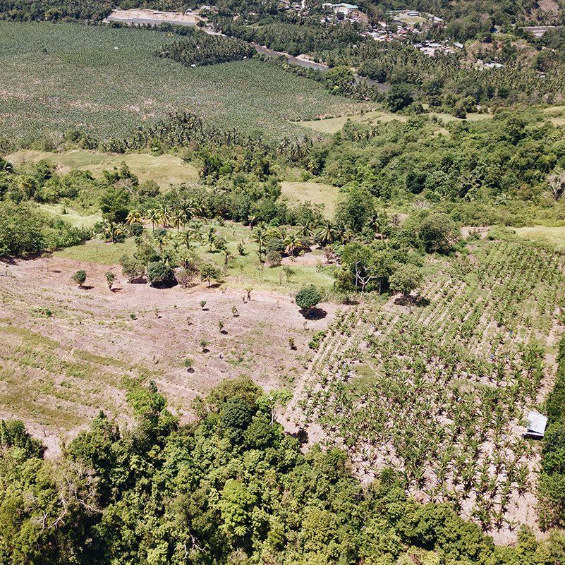 DJI 0067 2 1 e1587934337239 - 100.000 Bäume gegen den Klimawandel
