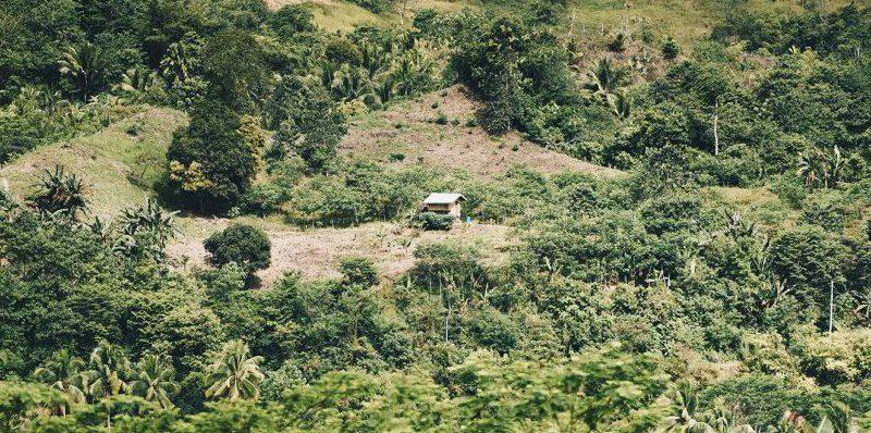 DSC 7387 2 1 e1587934411681 - 100.000 Bäume gegen den Klimawandel