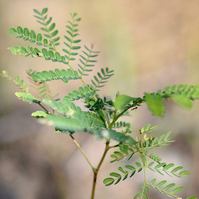 DSC 9401 e1587934251590 - 100.000 Bäume gegen den Klimawandel