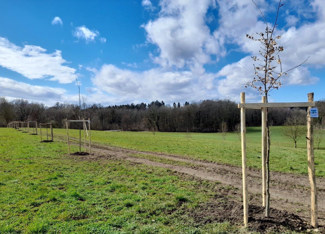 14 Eichenallee 2 - Bäume pflanzen für die Enkel