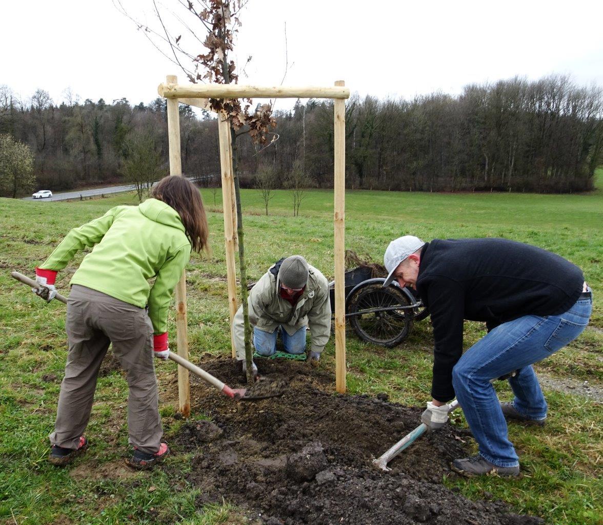 DSC01647b - Bäume pflanzen für die Enkel