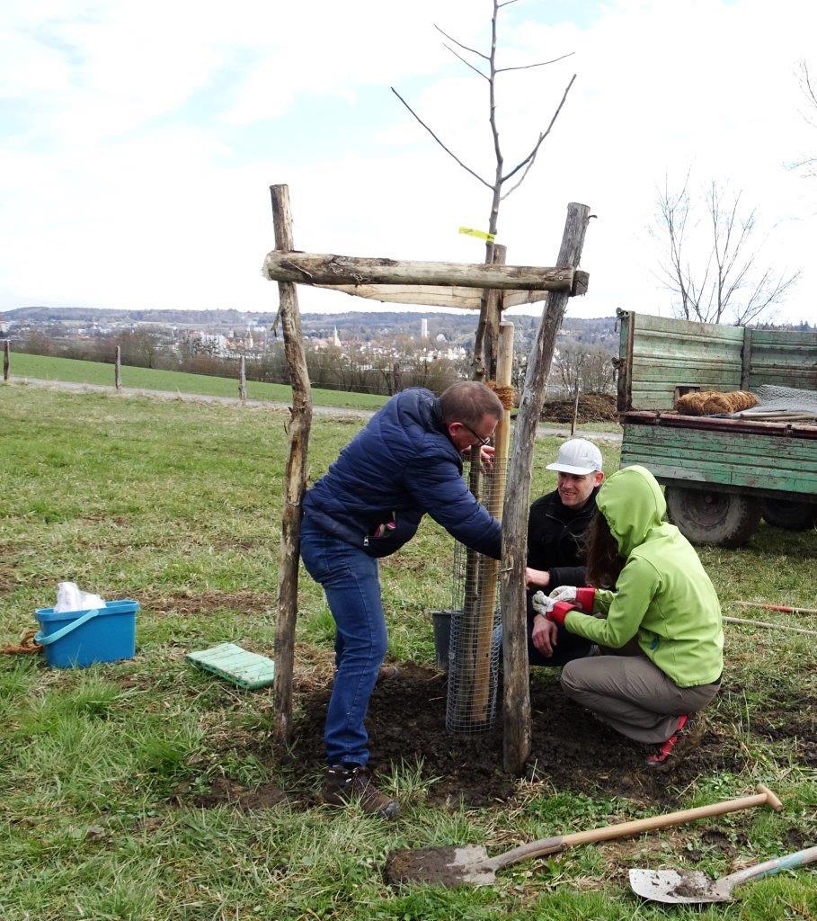 DSC01714b - Bäume pflanzen für die Enkel